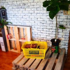 観葉植物/ウッドパレット/パレット/インスタグラムやってます/ブログ書いてます/うららかものづくりCafe/... ホームセンターの木材を使って、パレットを…