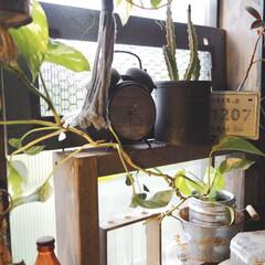 アイデア投稿しました/観葉植物のある暮らし/観葉植物/junk/雑貨/リビングあるある/... リビングの窓辺の観葉植物コーナーです。 …
