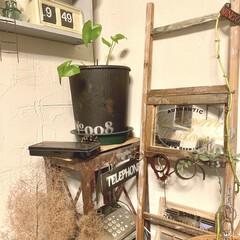 フジワラ化学 練り済み珪藻土 壁材 MIX アマイロ 8344700 壁材 リフォーム diy 1個(珪藻土、漆喰)を使ったクチコミ「よく使う革のブレスレットなどは、 自作の…」