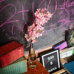 ひな祭り/ピンク/ダイソー/100均/DIY/雑貨/... 我が家の河津桜です。 飾ってみました。 …