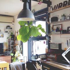 リビング/観葉植物のある暮らし/照明/フォロー大歓迎/アイデア投稿もしています/インスタグラムやってます/... おはようございます☀ 最近の我が家のリビ…