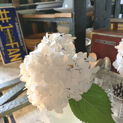 カウンター/花瓶/紫陽花/インテリア/雑貨/暮らし/... 紫陽花が咲きました。 一輪瓶に挿して飾り…