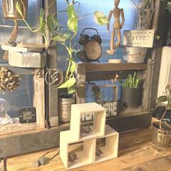 観葉植物のある暮らし/カウンター/時計/IKEA/雑貨/DIY/... こんばんはー♪  久しぶりにセリアに行っ…