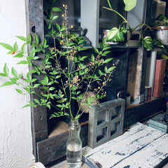 詳細情報はブログを見てね/アイデア投稿もしています/インスタグラムやってます/ブログ書いてます/うららかものづくりCafe/DIY/... お庭のグリーン(南天)飾ってみました。 …