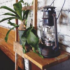 ペイント/観葉植物/インスタグラムやってます/ブログ書いてます/うららかものづくりCafe/フォロー大歓迎/... ニトリ様で購入したランタンは、ほんのり錆…
