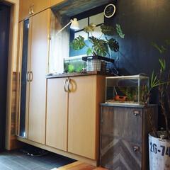 フェイクグリーン/古民家カフェ風/カラーボックスリメイク/カラーボックス/インテリア/DIY/... カラーボックスのリメイク完了しました。(…