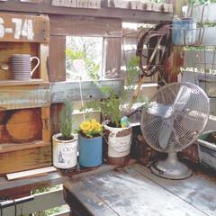 リミアな暮らし/ウッドデッキ/ミモザアカシア/ガーデン雑貨/DIY/雑貨/... 先日のミモザアカシアは、とりあえずウッド…