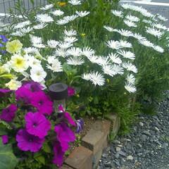 花/花壇/グリーン 最近撮ったものではないのですが、春の花々…