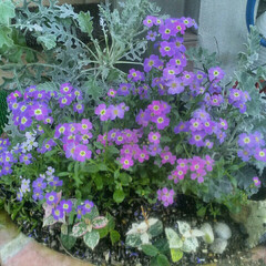 ガーデニング/花壇/グリーン/初投稿 初めて写真投稿してみます。 園芸店で見つ…
