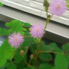花/母の日/グリーン ピンクの花が可愛いのと何となく花火のよう…