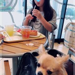 AEONペットモール/ドトールコーヒー/チワワ/ペット/犬 ココくん♪ 今日、娘とココと私の3人でA…