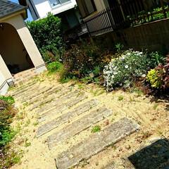 ガーデン/植栽/庭/薔薇/クリスマスローズ/スモークツリー/...