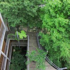 庭・ガーデニングリフォーム/ウッドデッキ/庭/ナチュラル/世田谷 庭は自然の借景としてつくることが多いので…