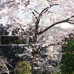 モダン/シンプル/ナチュラル/スタイリッシュ/デザイン/デザイナー/... 外壁は桜が映える色が選択された