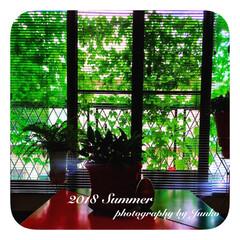 ゴーヤ/緑のカーテン/夏の風景/我が家の暑さ対策/住まい/植物/... ゴーヤの緑のカーテン・*+°  夏は思い…