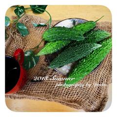 ゴーヤ/緑のカーテン/夏の風景/我が家の暑さ対策/住まい/植物/... ゴーヤの緑のカーテン・*+°  夏は思い…(2枚目)
