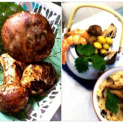 松茸/土瓶蒸し/お皿/食器/フード/おうちごはん 頂き物のマツタケ〜😍 土瓶蒸しとマツタケ…