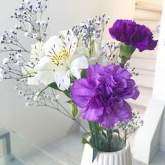 花/カーネーション/母の日 母の日のプレゼントに毎年カーネーションを…