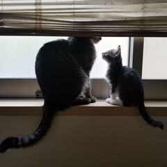 窓際/仲良し/愛猫/住まい/ペット ハク君が家族になり1ヶ月が経ちました😊 …