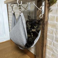 猫ハンモック 無理矢理入れられて怒る💢の巻