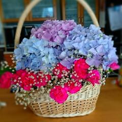 紫陽花/アレンジメント/お花のある暮らし/雨季ウキフォト投稿キャンペーン/令和の一枚/はじめてフォト投稿/... 母作品のゆりが萎れたので~かわりに紫陽花…