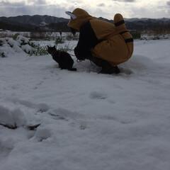 冬/猫/風景 猫と雪 猫とレッサーパンダ!?
