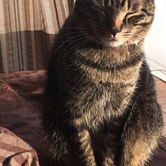猫/ペット 瞳が綺麗で可愛い! 一目惚れしてしまった…(6枚目)