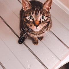 猫/ペット 瞳が綺麗で可愛い! 一目惚れしてしまった…(3枚目)