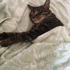 おやすみショット 本当にいつも気持ちよく寝てる~!(5枚目)