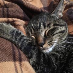 おやすみショット 本当にいつも気持ちよく寝てる~!(4枚目)