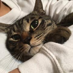 猫/ペット 瞳が綺麗で可愛い! 一目惚れしてしまった…(1枚目)
