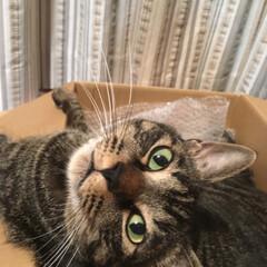 猫/ペット 瞳が綺麗で可愛い! 一目惚れしてしまった…(4枚目)