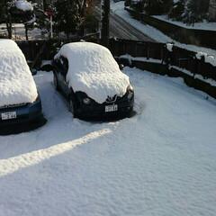 冬の景色 誰も👣を踏み入れていない 新雪❄ キラキ…