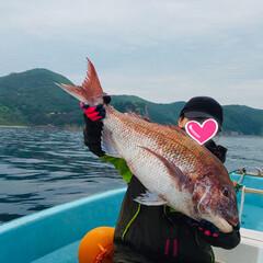 食べるの楽しみ/お刺身/タイ/釣り/趣味 鯛釣りに行ってきました! 今年も大物ゲッ…