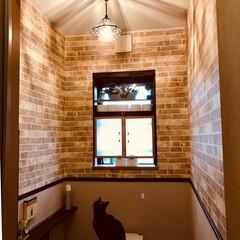 照明/セルフリフォーム/トイレリフォーム/トイレ/LIMIAペット同好会/フォロー大歓迎/... DIYでセルフリフォームしたトイレの照明…