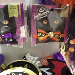 ハロウィン仮装/ハロウィン/100均/セリア セリアのペット用ハロウィングッズ。猫ちゃ…