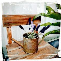 編み物/香り/紫/祭り/まつり/ラベンダー/... 今年は3ヶ所、ラベンダーまつりに行きまし…