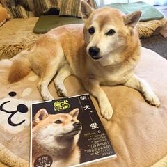 雑誌掲載/長寿の秘訣/柴犬/犬/わんこ同好会 年末に発売された雑誌「柴犬ライフ」に載り…