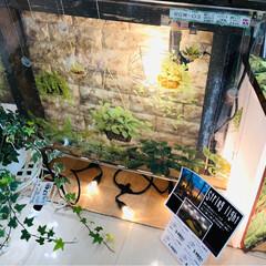 島忠ホームズ小平店/癒しの空間/窓ガラスシート/観葉植物/グーリン/インテリア/... 窓に貼るグーリンデコシリーズの売り場を作…