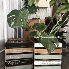 記事公開中/廃材DIY/ホームセンター/植木鉢カバー/DIY女子/ターナーミルクペイント/... イベント用に植木鉢カバーをdiyしました…