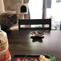 ペット/ミヌエット/ニャンコの居る暮らし/おうちごはん/猫 珍しく連投です😅すみません。 気になって…(2枚目)