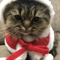 猫/にゃんこ同好会/クリスマス/ペット Merry Christmas💕    …