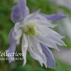フラワー/ガーデニング 春の花、そのコレクションです。