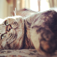 m100/Canon/ねこ/朝/まったり/cat/... 朝のまったり時間😽