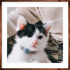 保護猫/ペット/猫/ペット仲間募集/わんこ同好会/にゃんこ同好会 ニューフェイスです😊保護した猫ちゃんが急…