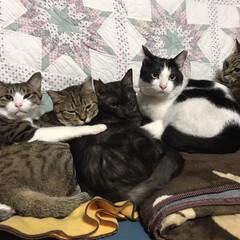 キジ白/キジトラ/白黒/黒猫/かわいい/可愛い/... 仲良し♡  冬限定❄️