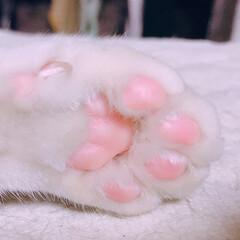 かわいい/可愛い/肉球/ピンク/フォロー大歓迎/ペット/... ピンクの肉球可愛い♡  ついつい触ってし…
