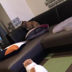 猫との暮らし/にゃんこ同好会/LIMIAペット同好会 相変わらずのラブ♡とリンク☆ クッション…