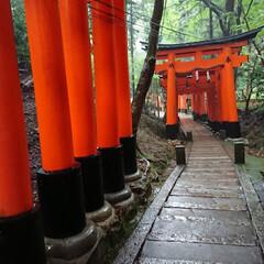 御朱印/京都の旅/⛩巡り/女2人旅 先週末、ネイリストのお友達と京都の⛩巡り…