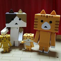 おもちゃ(玩具)/インテリア雑貨/猫グッズ 新しい家族が増えました❤